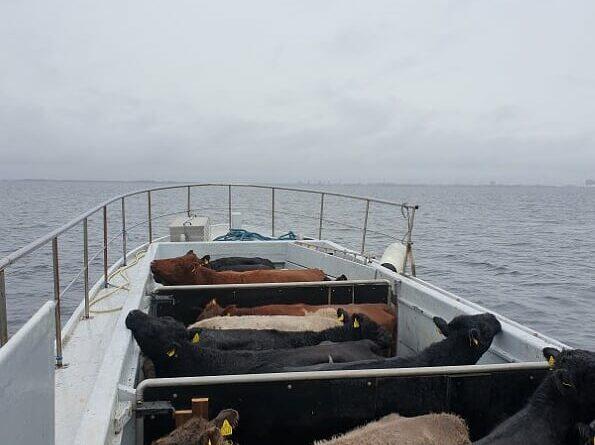 Så er sommergæsterne sejlet til fastlandet